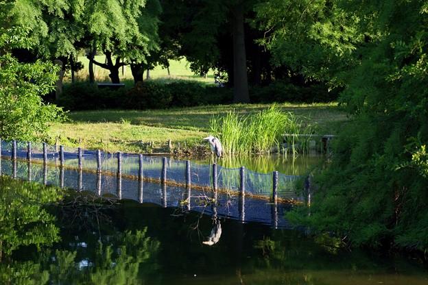 水元公園 水生植物園