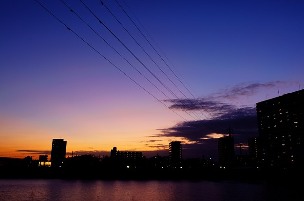 Photos: 中川土手