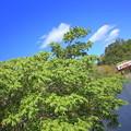 写真: 大池遊園をいく