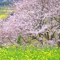 Photos: 春 その1