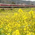 Photos: 春 その4