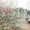 Photos: 春 その5
