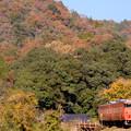 Photos: 秋を