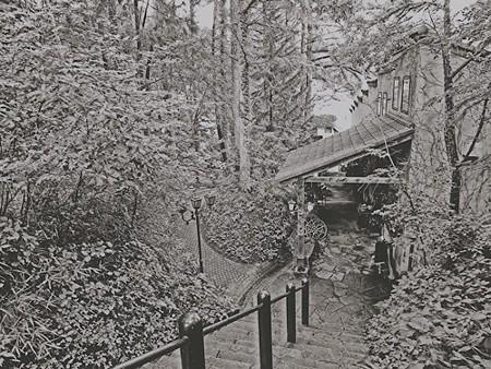 ロックハート城の森