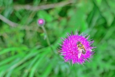 美ヶ原高原美術館で見かけた花と蜂