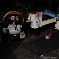 写真: 街猫905