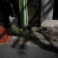 写真: 街猫907