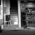 写真: 街猫912