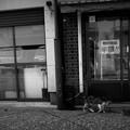 写真: 街猫920