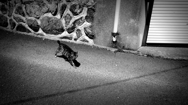 写真: 街猫921