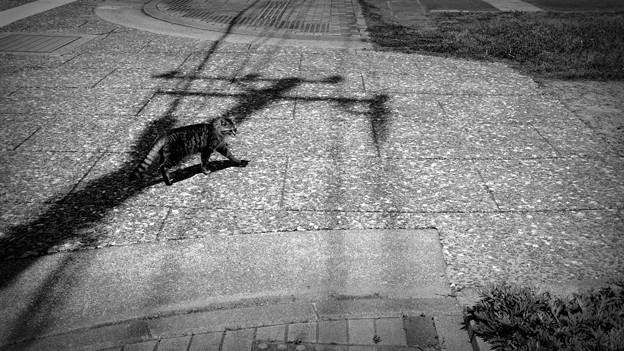 写真: 街猫924