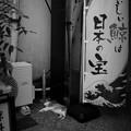 写真: 街猫979
