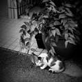 写真: 街猫982