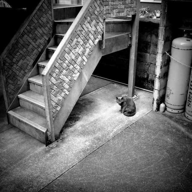 街猫991