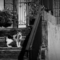 街猫1039