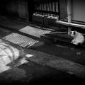 街猫1041