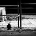 街猫1042