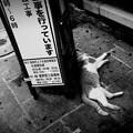街猫1046