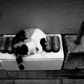 街猫1049