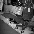 街猫1056