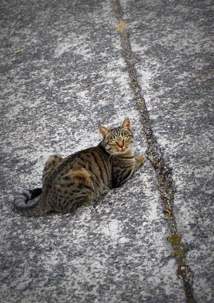 街猫1083