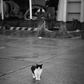 街猫1093