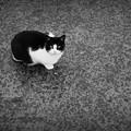 街猫1097