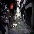 街猫1098