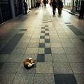 街猫1099