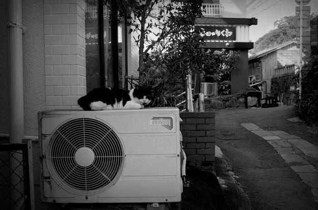街猫1108