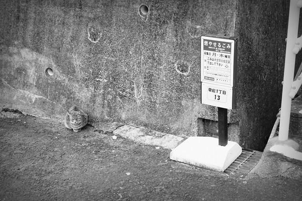 街猫1126