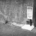 Photos: 街猫1126