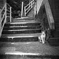 街猫1201