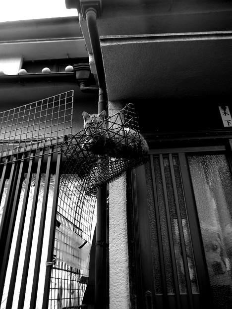 街猫1204