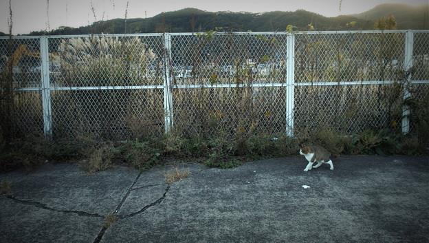 街猫1225