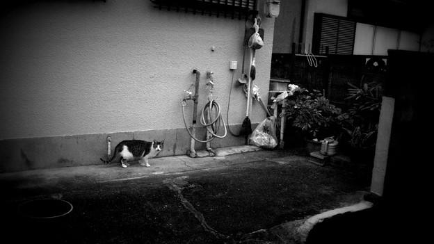 Photos: 街猫1240