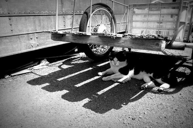街猫1245