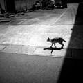 Photos: 街猫1244