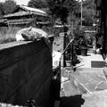 Photos: 街猫1245