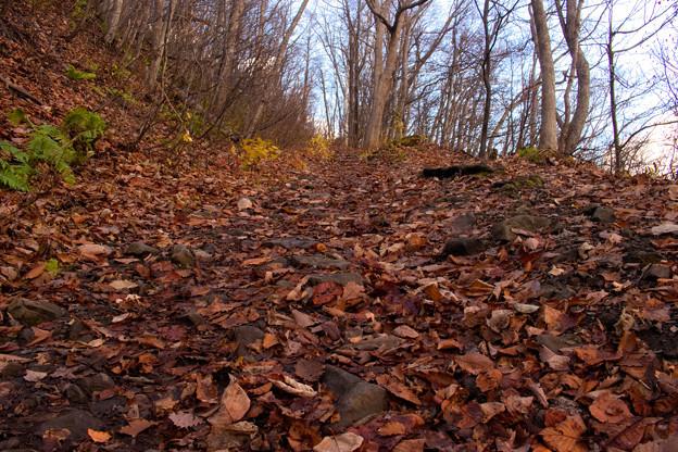 晩秋の登山道