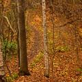 写真: 晩秋の登山道