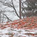 写真: 落ち葉と雪
