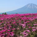 Photos: 羊蹄山と芝桜