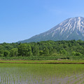 Photos: 田植えと羊蹄山
