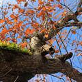 秋空と紅葉IMG_9215a