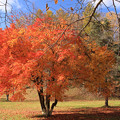 京極町の紅葉IMG_9219a