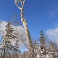冬晴れの森IMG_9719a