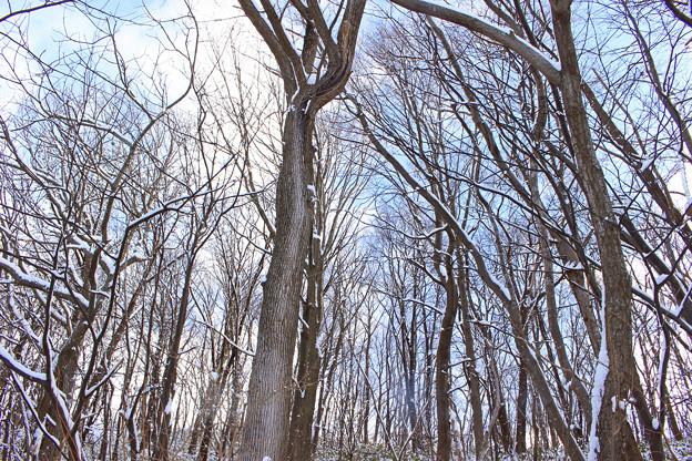 冬晴れの森IMG_9594a