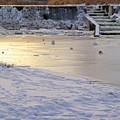 真冬の琴似発寒川IMG_9697a