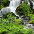 春の湧き水IMG_1056a